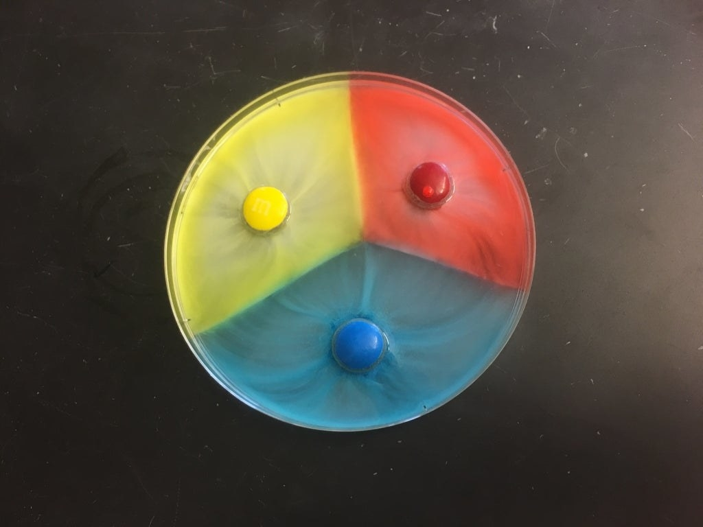 Portions of water in a circular dish are yellow, red, and blue, from the coating of M&M's