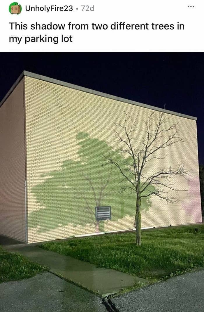 Two trees are casting shadows onto a bare tree that makes it look like the tree's shadow is full of leaves