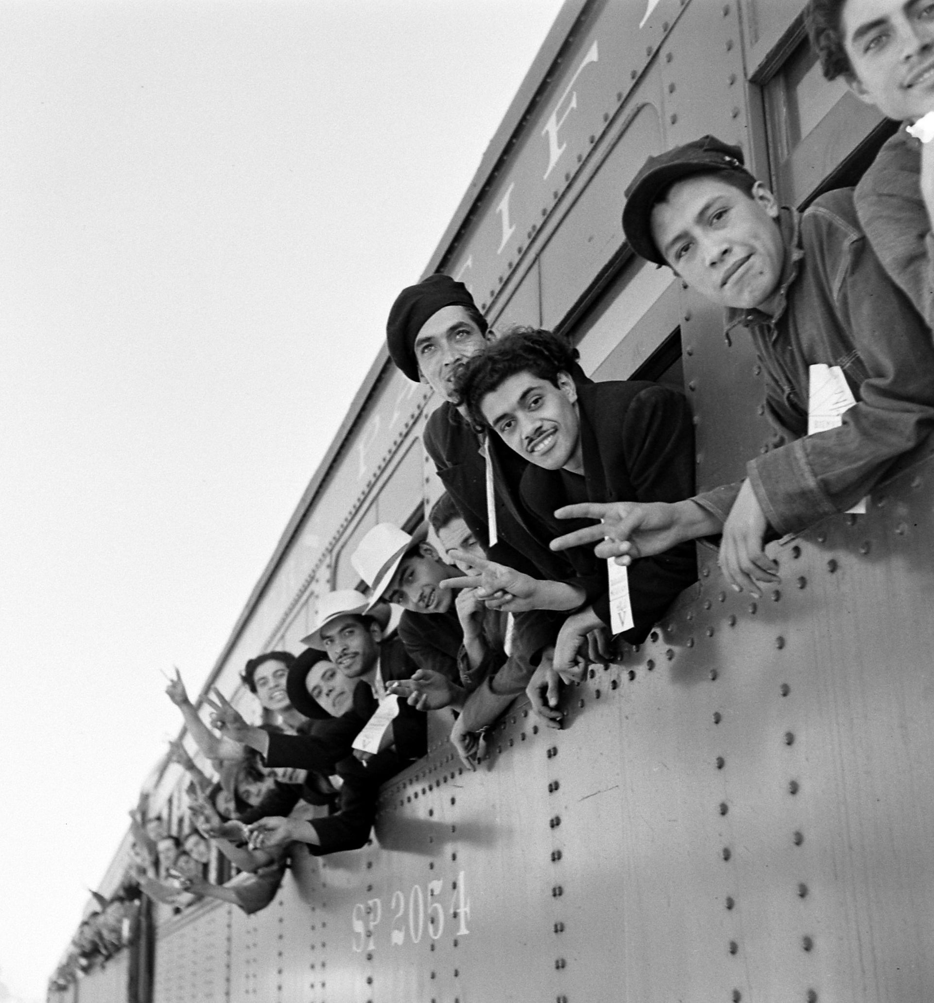 Mexican laborers from the Bracero Program leaning out the windows of a train