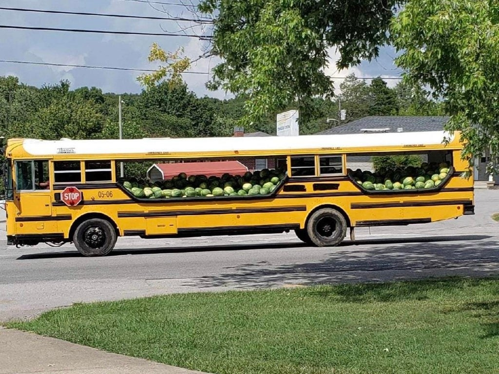 A long, yellow school bus has been modified to transport countless watermelons