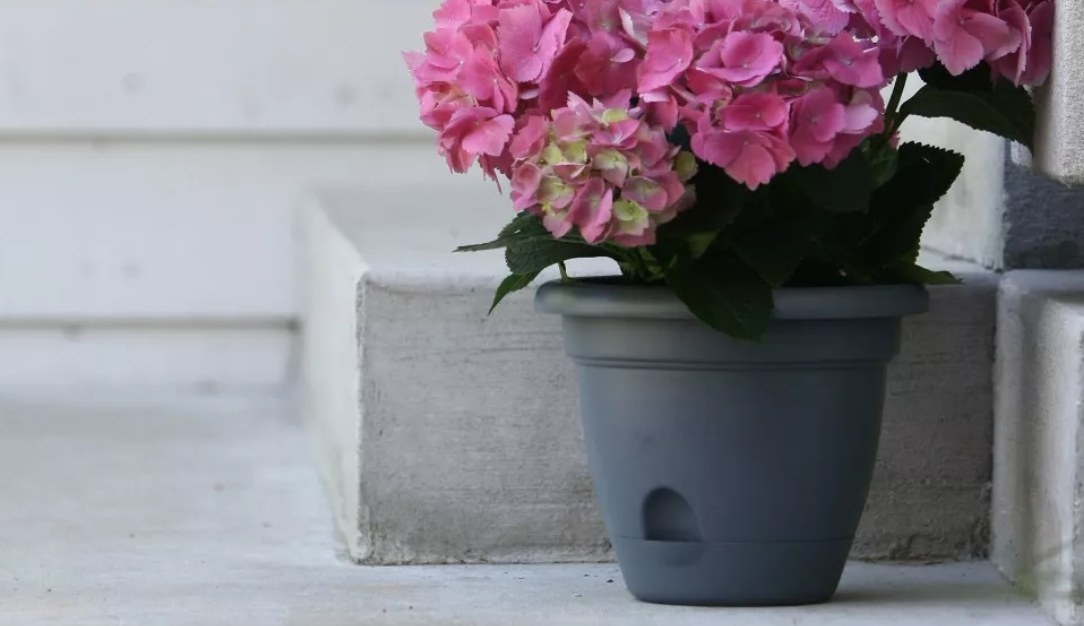 A round gray self-watering planter