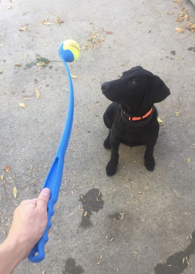 Owner and dog with the Chuckit ball launcher