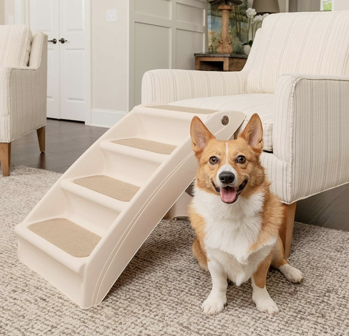 Product photo showing a corgi sitting next to pet steps