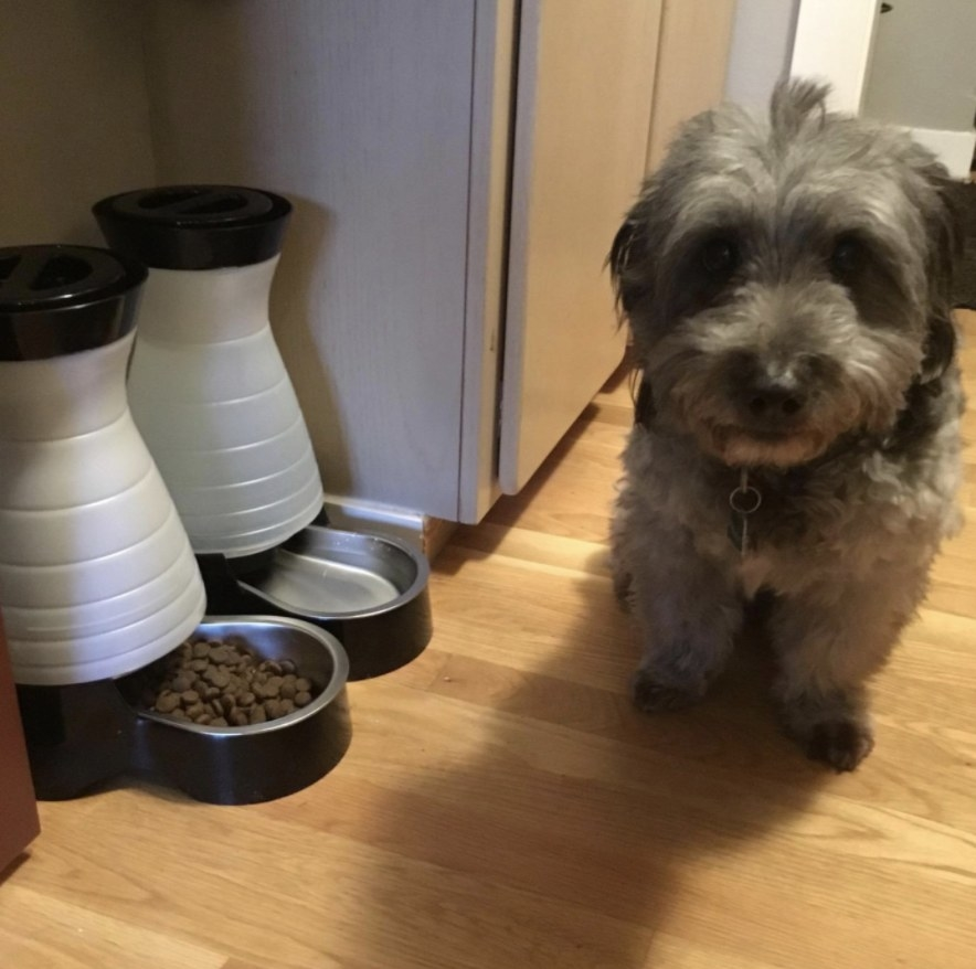 Reviewer's dog sits next to their feeder and watering stations