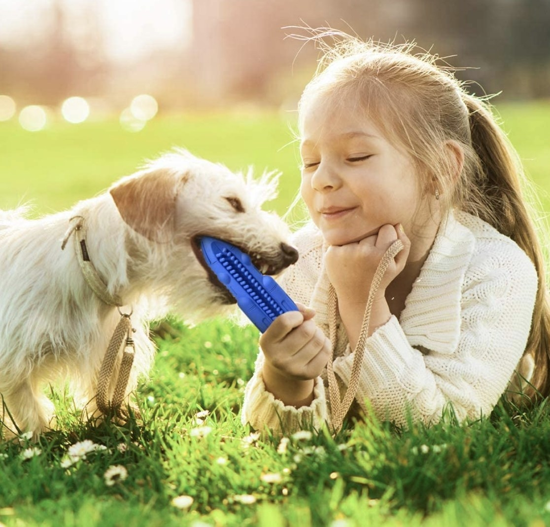 Girl plays with dog with toothbrush squeaky toy