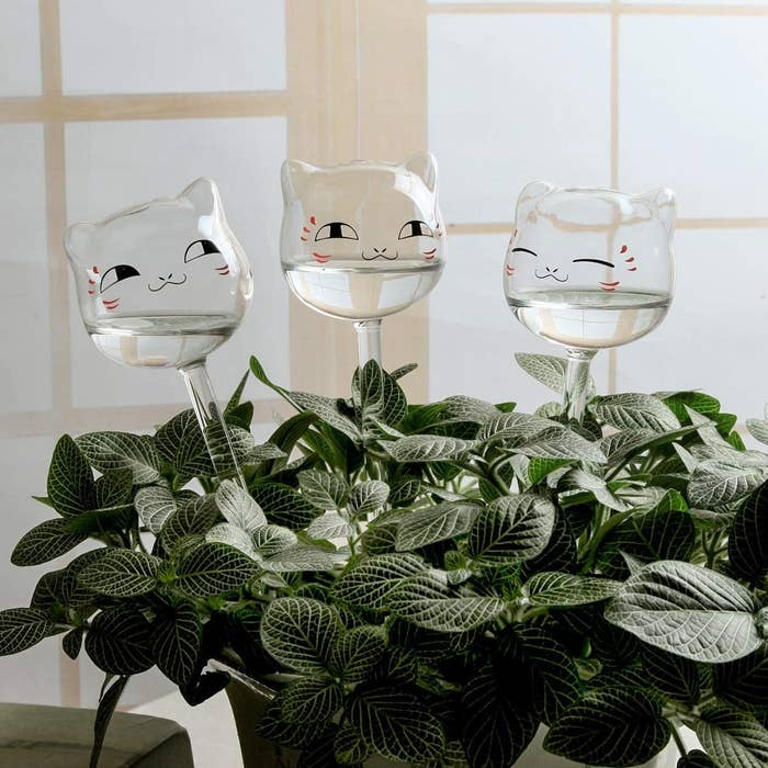 Three self-watering globes in a plant