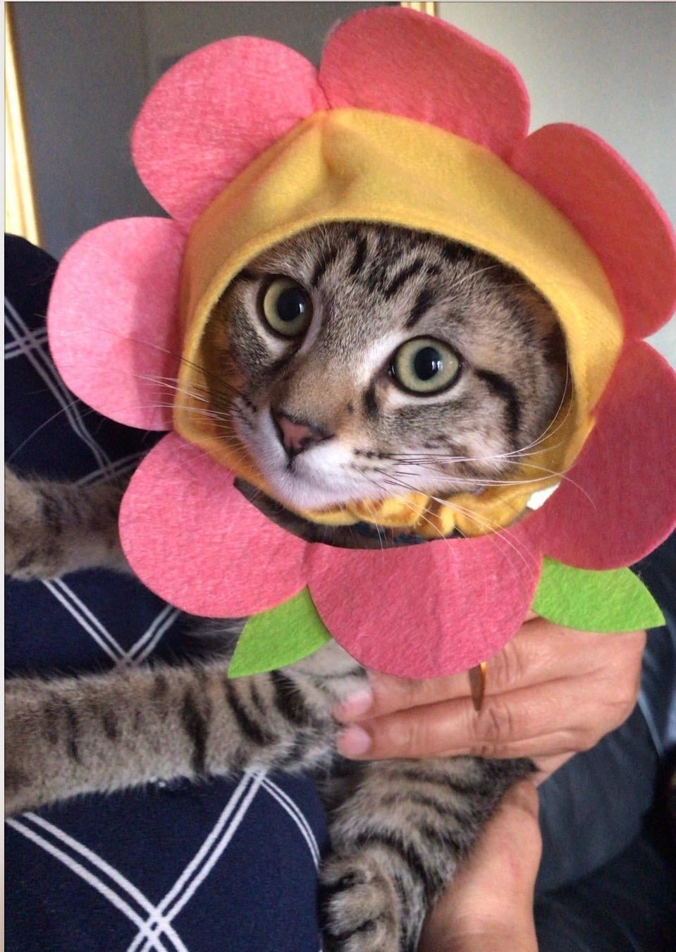 cat wears hat that has petals and leaves