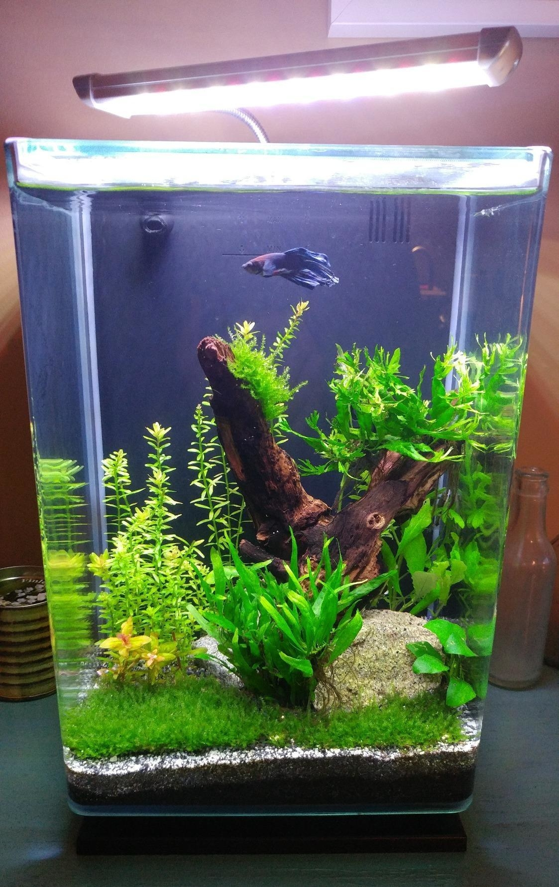 Reviewer photo of their tank