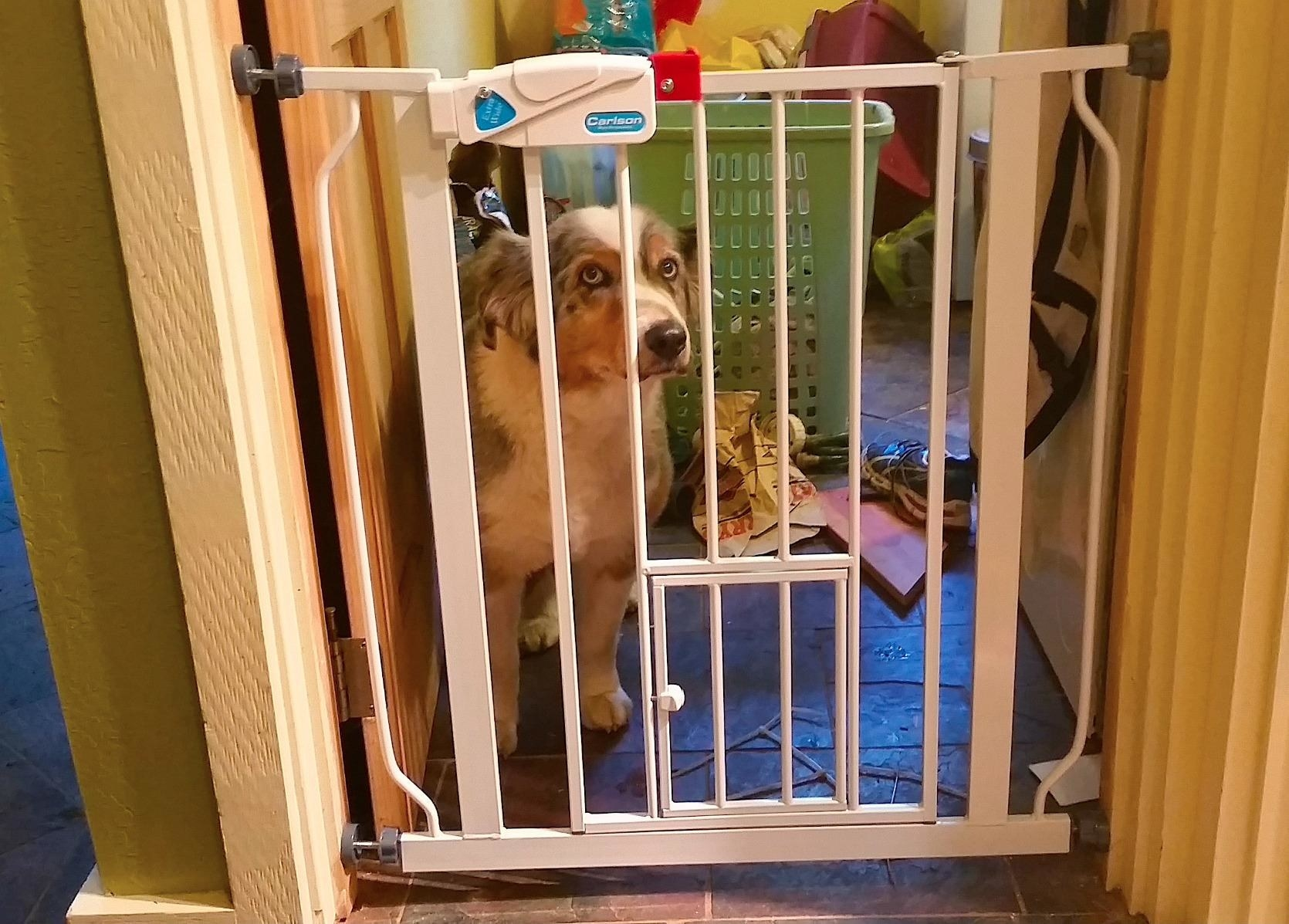 Reviewer photo of their large dog sitting behind the gate