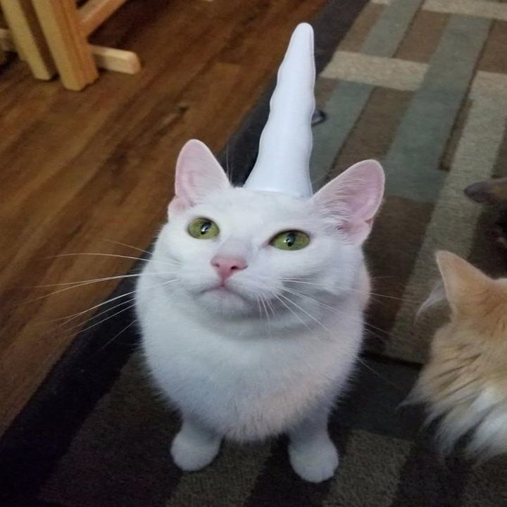 Reviewer's cat wearing the unicorn horn