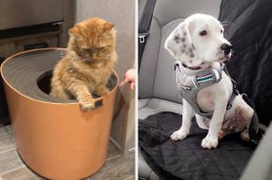 Side by side of cat in litter box and puppy wearing a seatbelt harness
