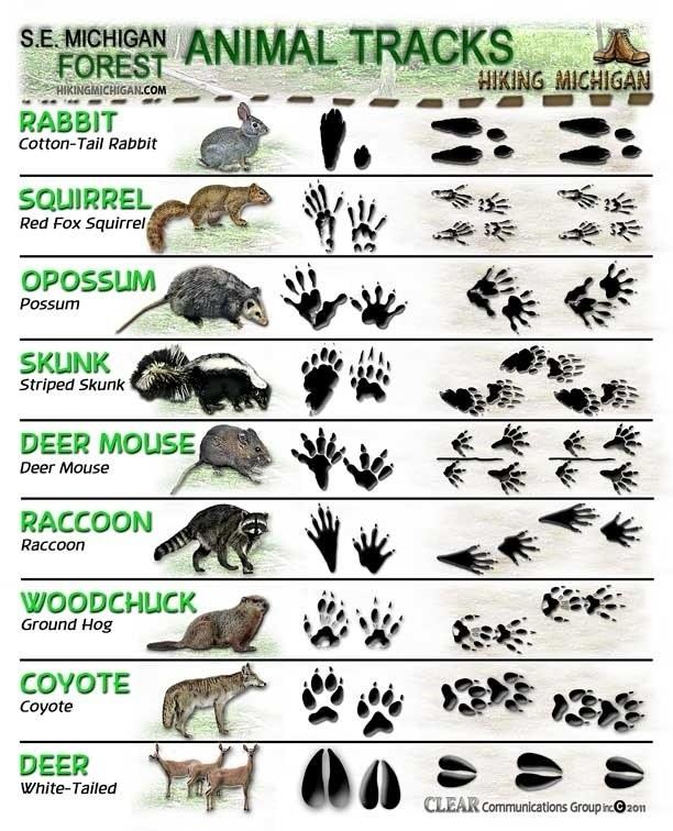 Types of animal tracks