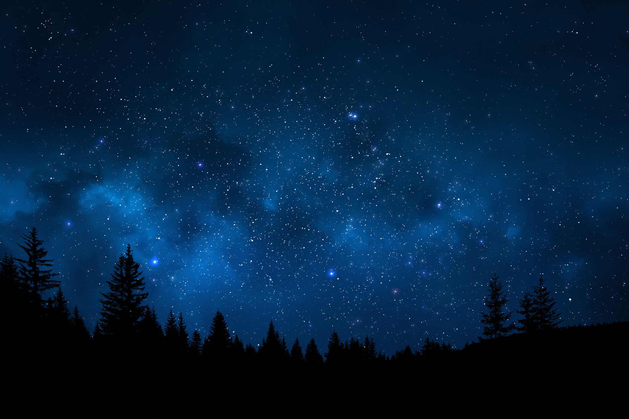 A starry blue night sky with the outline of large fir trees at the bottom