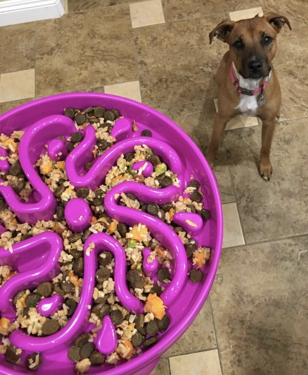 Reviewer's dog sits waiting to be served meal in fun feeder