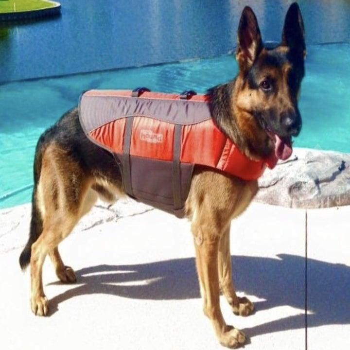 reviewer's German Shepherd wearing life preserver