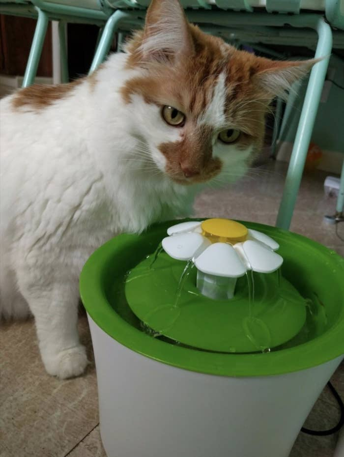 Reviewer's cat drinks from water fountain