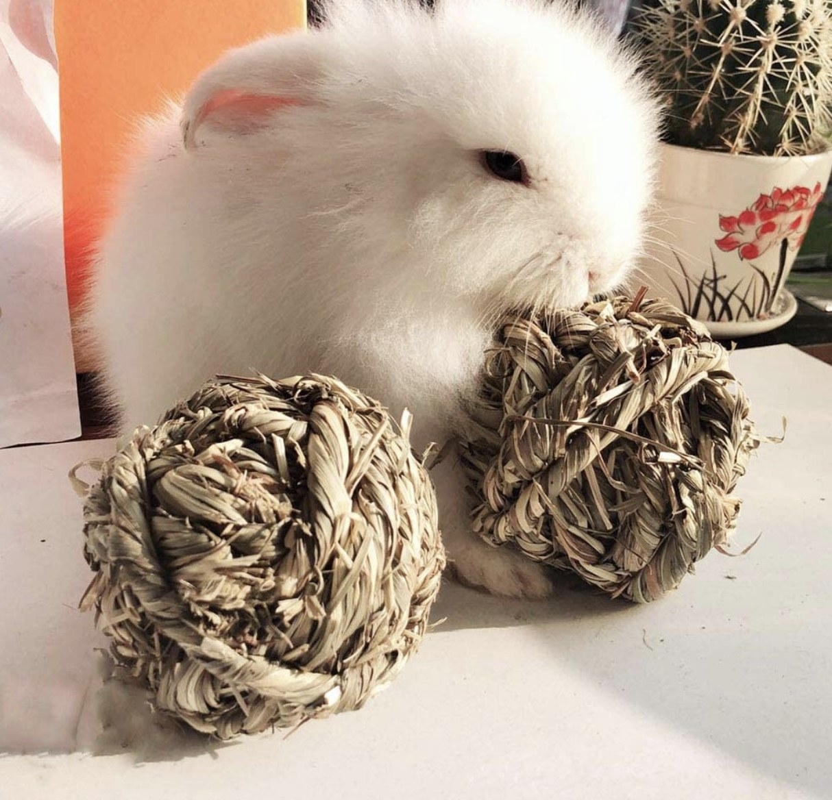 Bunny with chew balls