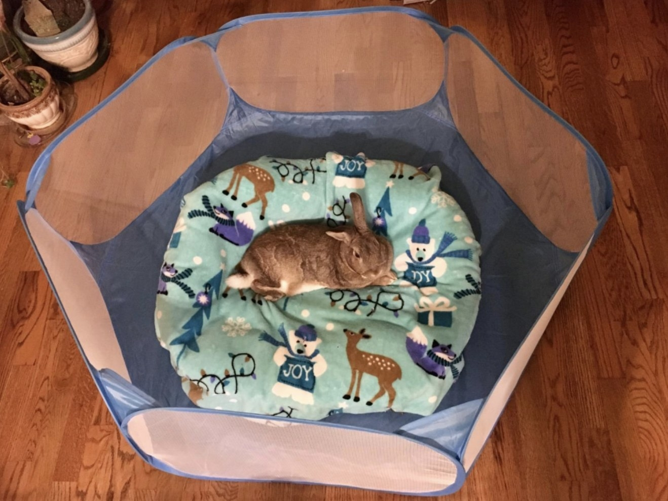 Reviewer's bunny in small open tent