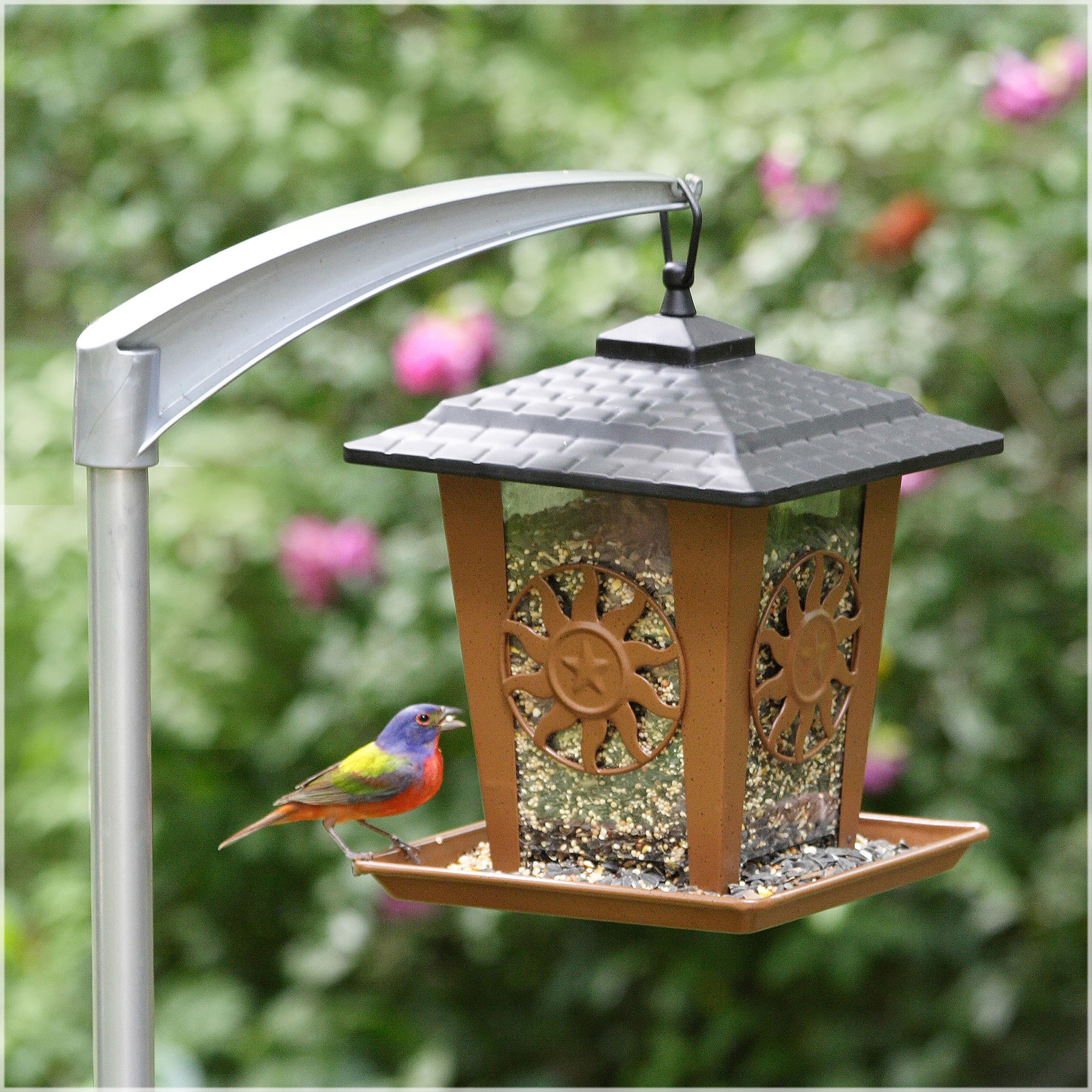 The Perky-Pet Sun and Star Lantern Wild Bird Feeder hangs from a post. A rainbow bird sits on its ledge, eating seed.