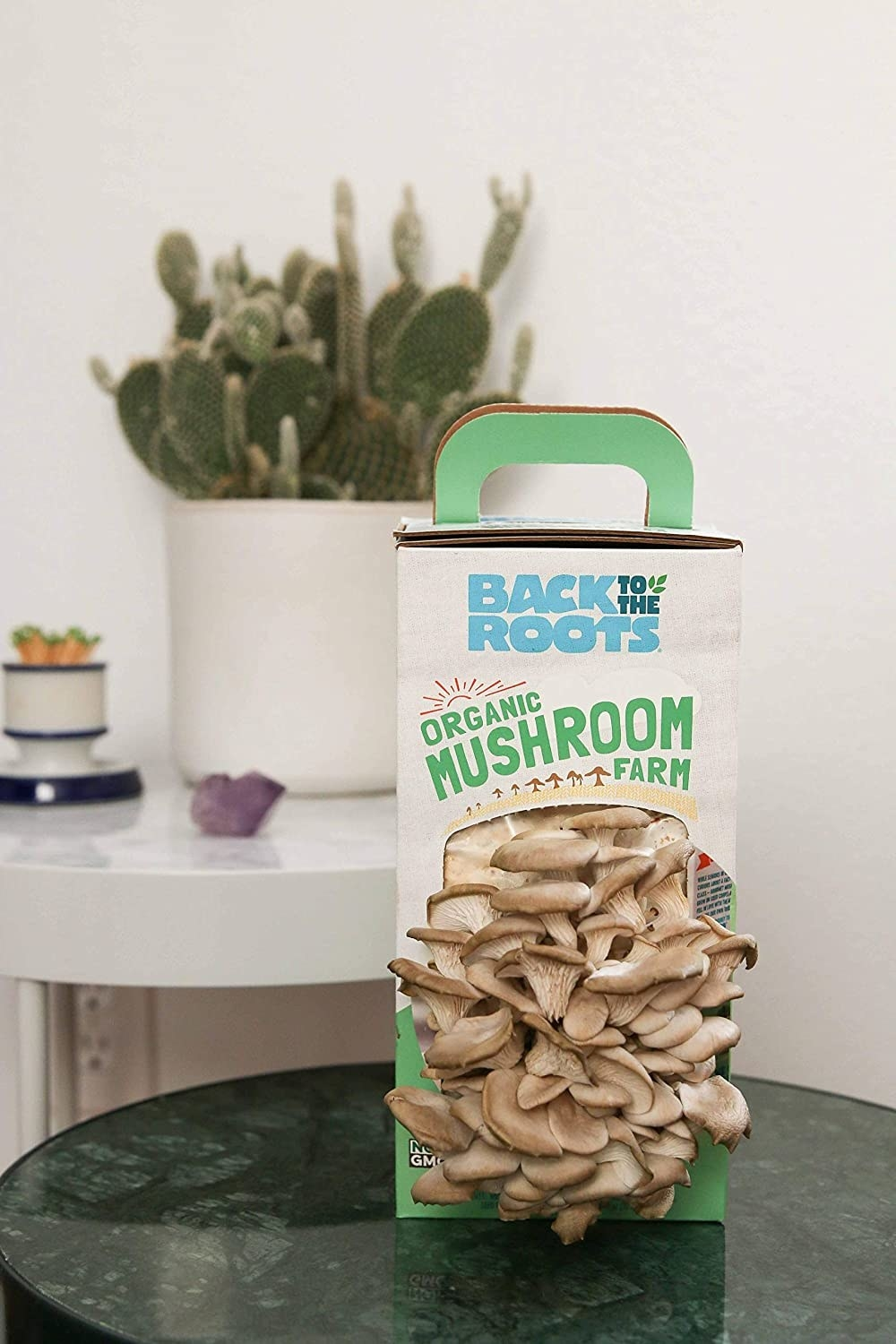 The kit with dozens of mushrooms growing