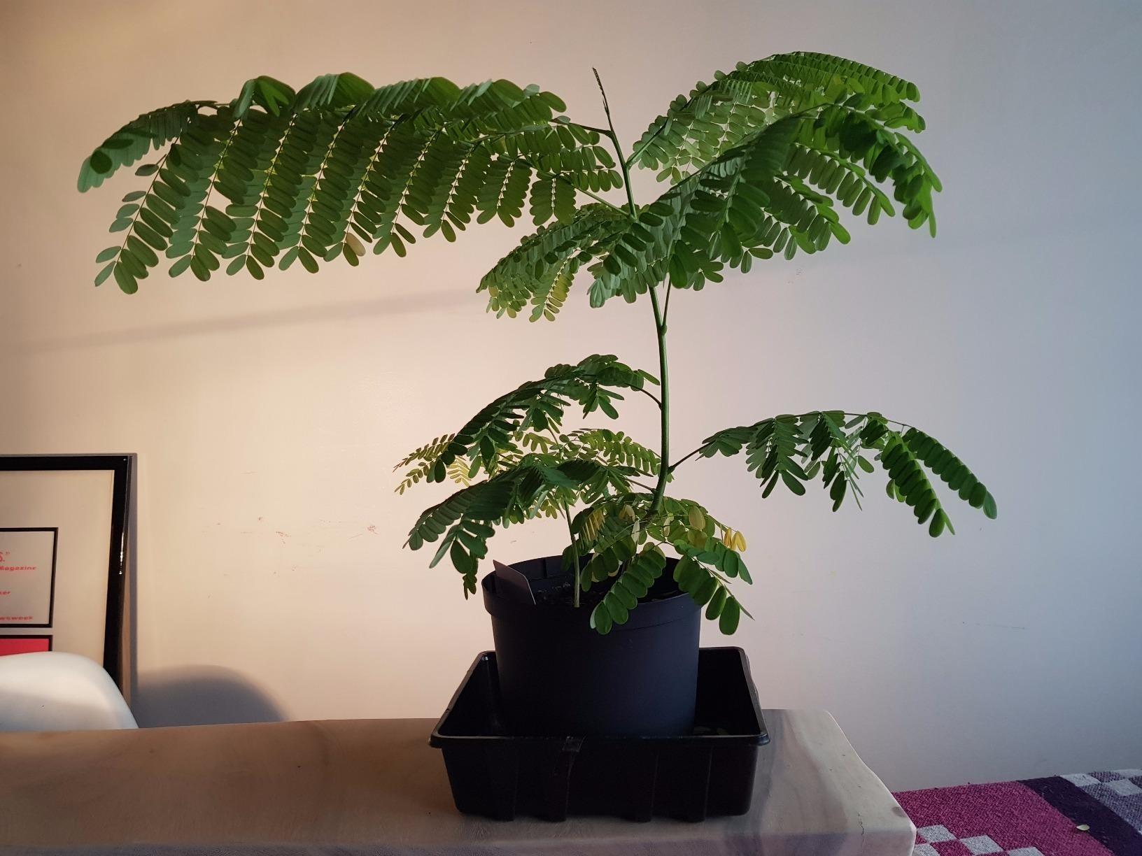 Reviewer photo of their thriving bonsai