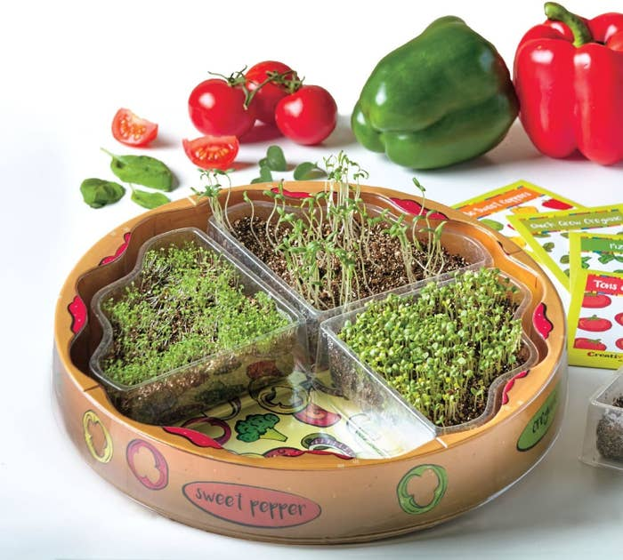 The kit, which is circular and designed to look like a pizza with each quadrant growing a different pizza herb or veggie