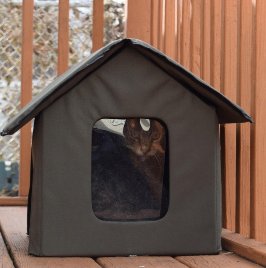 Reviewer's cat in the small outdoor house