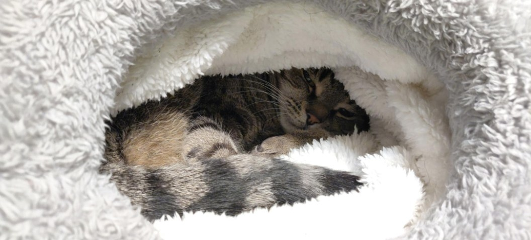 Reviewer's cat snuggled in the fuzzy sleeping bag
