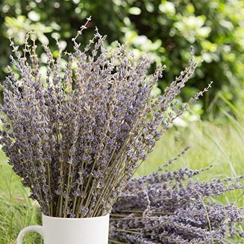 A bundle of the dried lavender flowers.