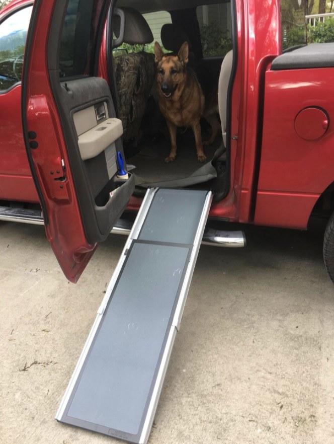 German Shepard sitting at top of dog ramp inside red truck