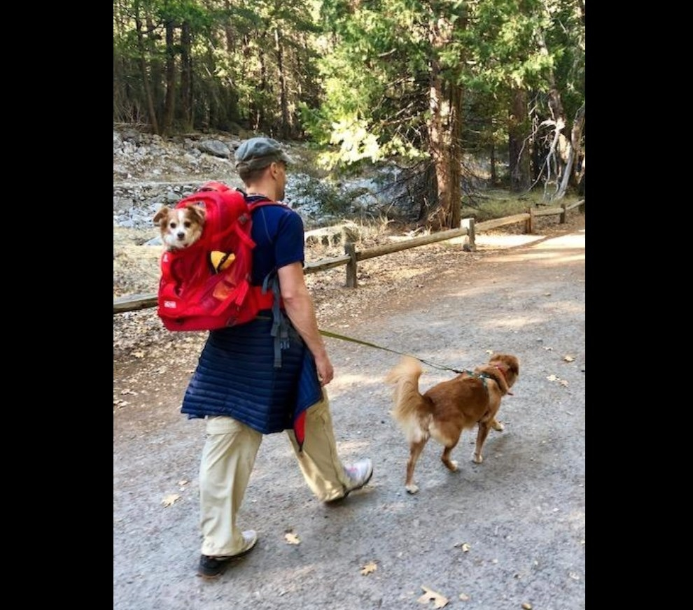 Reviewer walking one dog while carrying another on their back in a backpack