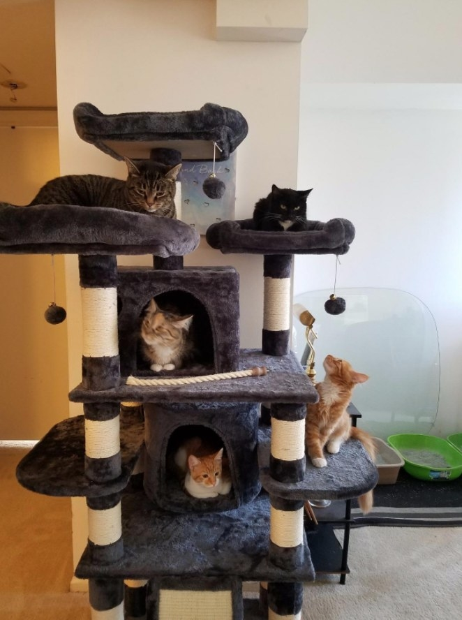 Reviewer's multiple cats resting in the cat tree