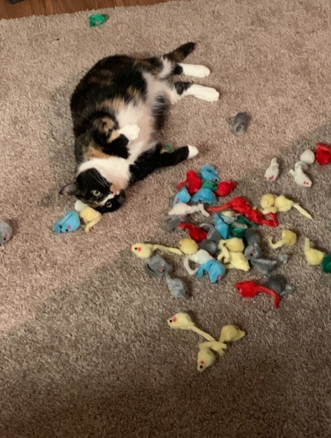 Reviewer's cat playing with the mouse toys