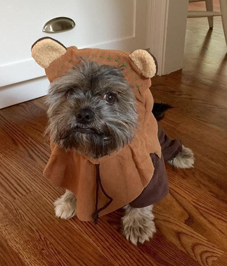 Scruffy brown dog dressed up as a Star Wars Ewok