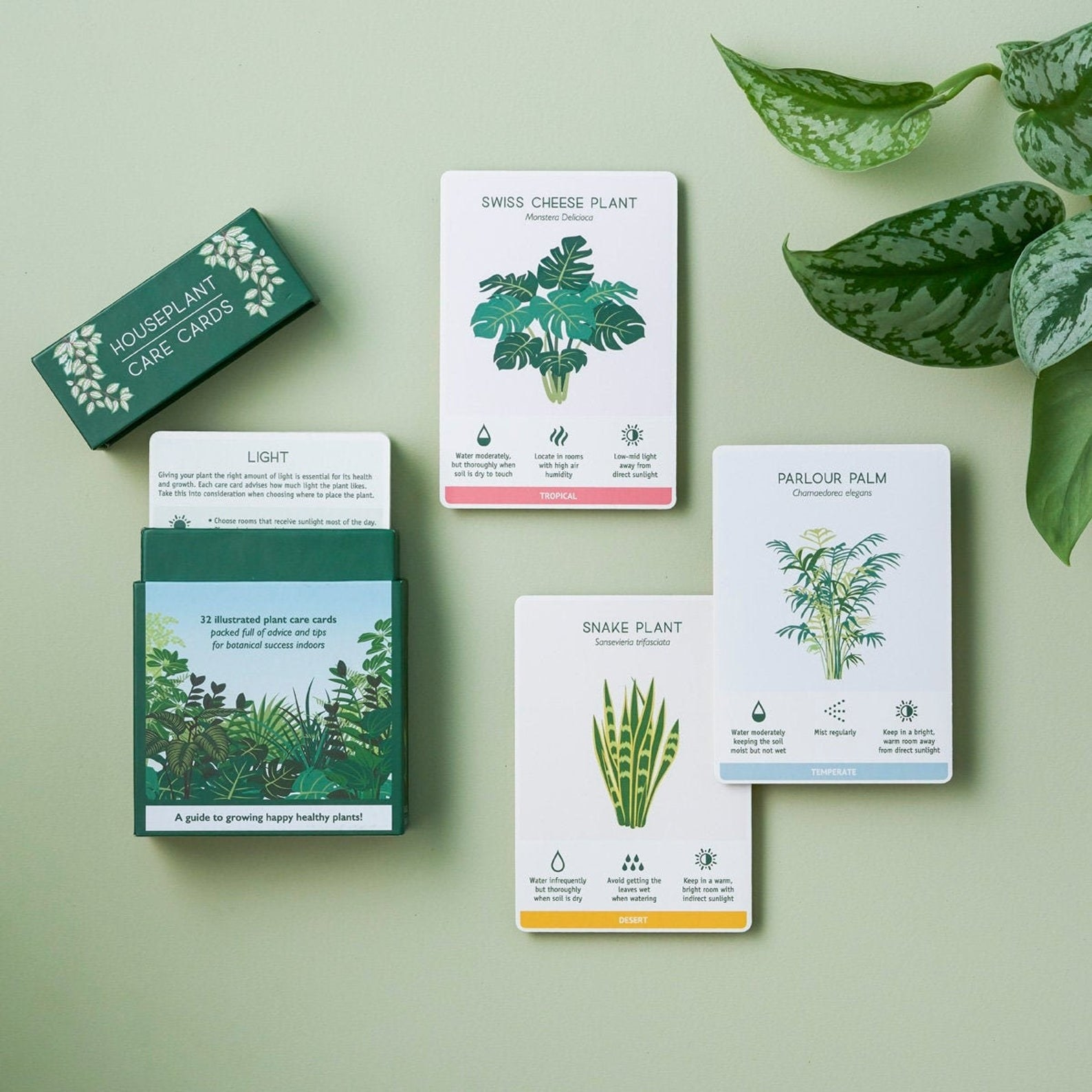 The deck of illustrated cards with facts about different plants
