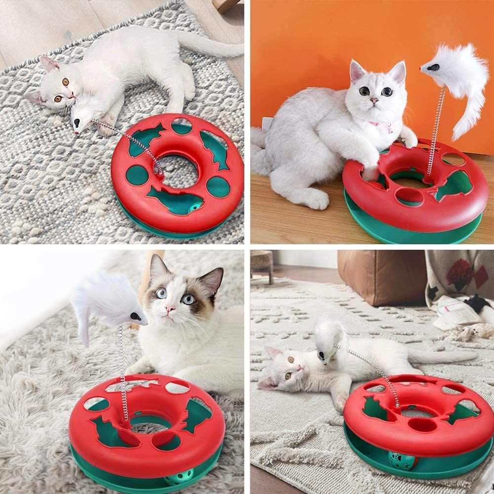 Cat playing the small round interactive toy