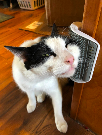 A reviewer's cat scratching their face against the rounded, comb-like edge of the grooming tool