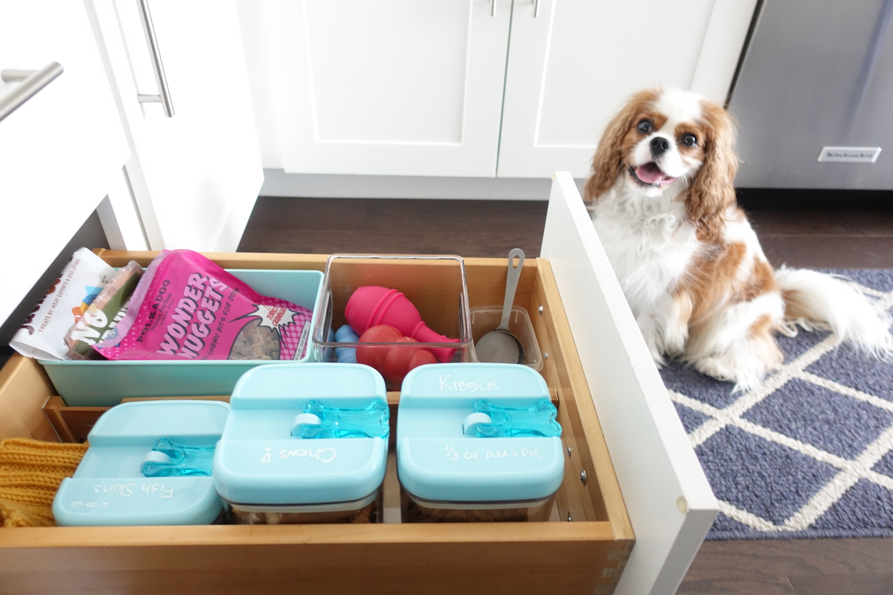 A dog sitting next to a drawer of dog treats, toys, and food