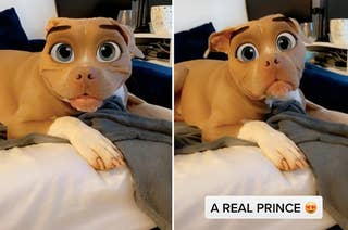 Pit Bull with Disney face filter on that gives him large cartoon eyes
