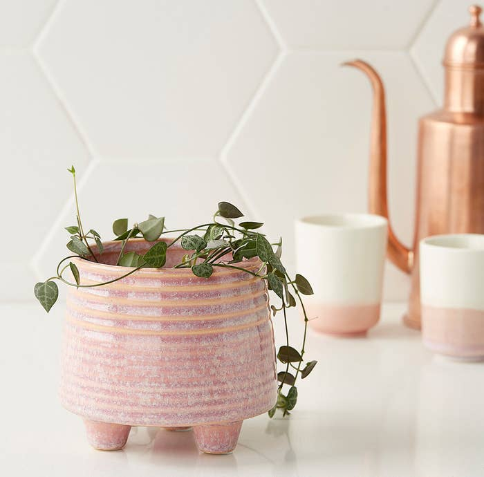 A pot with plants in it