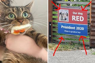Cat eating a hard-boiled egg, a sign advertising a dog for President