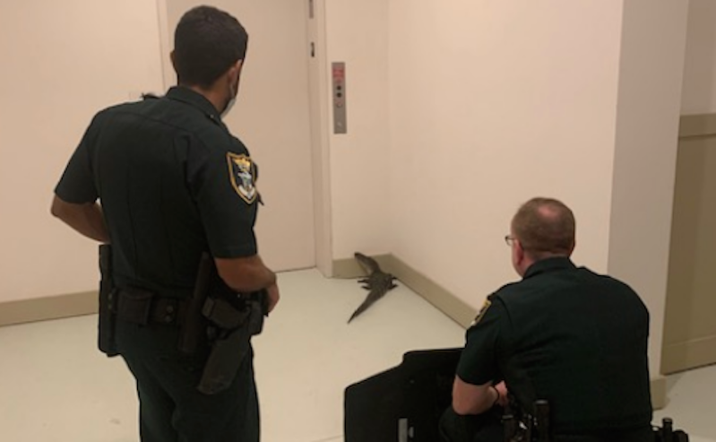 Police officers looking a gator near an elevator