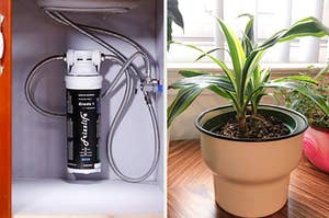An under sink filtration system / a healthy plant