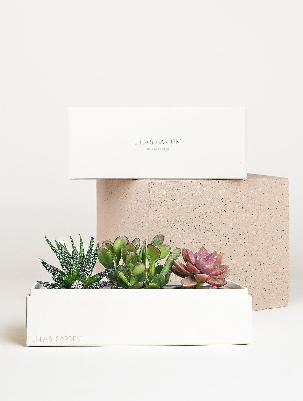 A jewel garden, consisting of three small pre-planted succulents in a box that measures about eight inches long