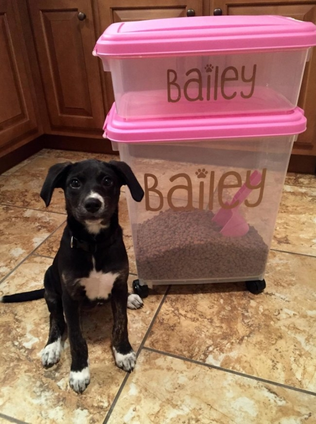 Black and white puppy sitting on floor in front of two-compartment pink and clear food storage container on wheels