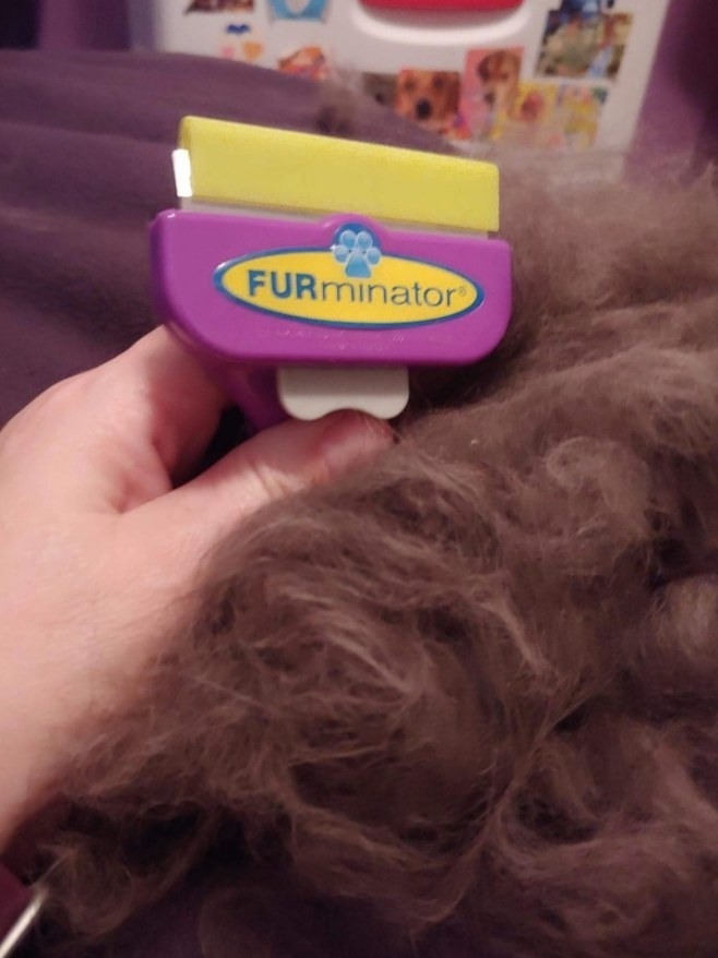 Reviewer holding a FURminator cat brush with clumps of cat hair