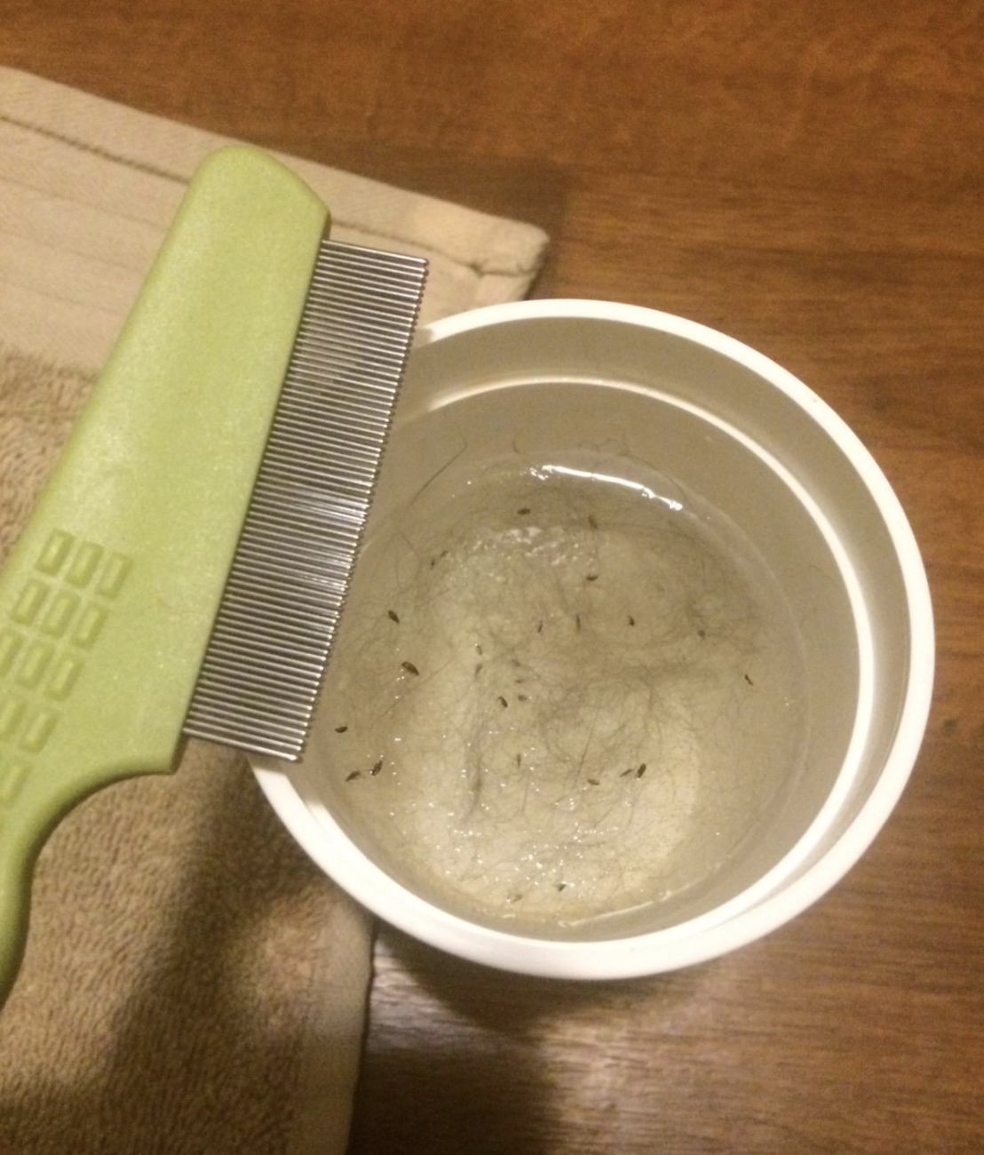 reviewer photo of green comb next to cup filled with water and fleas