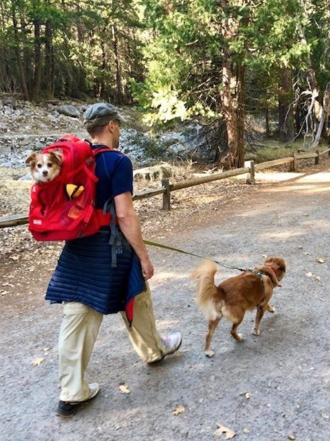 person walking a dog while carrying another in a red backpack on their back