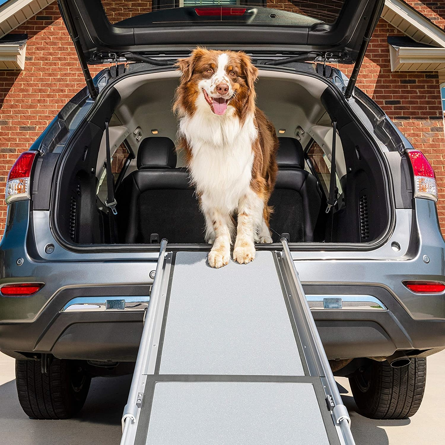 Dog standing in the back of a car at the top of a ramp