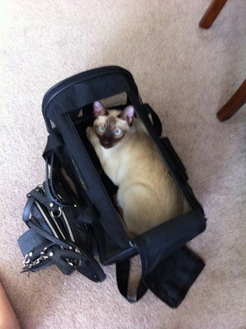 Top-down photo of reviewer's cat sitting inside the carrier